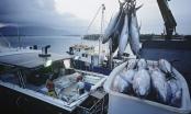 Slide - Điểm tin thị trường: Mỗi tháng người Việt chi gần 140 triệu USD nhập tôm, cá