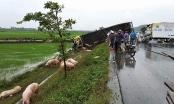 Hàng chục con lợn văng ra đường sau cú tông vào xe tải của tài xế