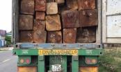 Gia Lai: Bắt tạm giam phó giám đốc công ty vì vận chuyển gần 45m³ gỗ lậu