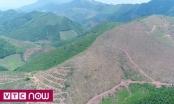 Hàng ngàn ha rừng Quảng Ninh bị phá do đâu?