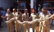 Trăn khổng lồ 'mò' vào đền thiêng ở Ấn Độ
