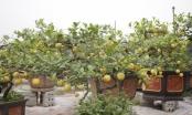 Những mẫu cây cảnh độc lạ phục vụ dịp Tết Kỷ Hợi 2019