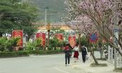Hà Giang sắp tổ chức Lễ hội hoa Đào năm 2019