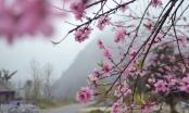 Photo: Hoa Đào, hoa Lê kéo du khách lên cao nguyên đá Đồng Văn