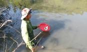 Cá chết trắng sông Krông Năng