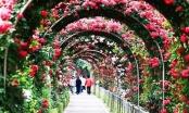 Lễ hội Hoa hồng thể hiện tình hữu nghị giữ Việt Nam và Bulgaria