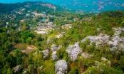 Bản làng Điện Biên tuyệt đẹp trong sắc hoa Ban