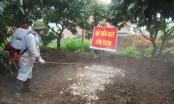 Nỗ lực ngăn chặn dịch tả lợn châu Phi phát tán
