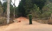 Bình Dương: Đu theo xe container tông đổ cây trong khu đô thị, 1 bảo vệ tử vong