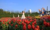 Phiêu lưu trong xứ sở hoa tulip diệu kỳ ngay tại Việt Nam - giấc mơ có thật