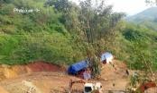 Tỉnh Hà Giang yêu cầu đình chỉ ngay dự án chăn nuôi lợn rừng núp bóng đào vàng