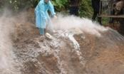 Lào Cai: Bắt giữ và tiêu hủy hơn 2 tấn lợn không rõ nguồn gốc