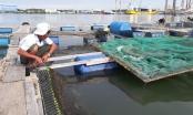 Bản tin Audio Pháp luật ngày 8/5: Hàng chục tấn cá nuôi trên sông chết hàng loạt chưa rõ nguyên nhân