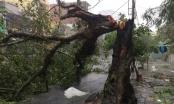 Bão số 12: Những hình ảnh thiệt hại đầu tiên tại Nha Trang, Phú Yên