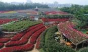 Flycam: Thiên đường hoa giữa lòng Hà Nội