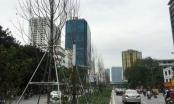 Những hàng cây ốm yếu trên đường phố Thủ đô