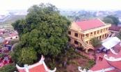 Quảng Ninh đón nhận 2 Cây Di sản nghìn năm tuổi