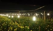 Mê Linh (Hà Nội):  Hiệu quả từ mô hình chuyển dịch cây trồng