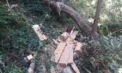 Gia Lai: Cận cảnh khu rừng Hải Yang bị lâm tặc phá tan hoang