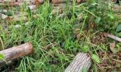 Phát hiện bãi tập kết gỗ không rõ nguồn gốc tại Ea Sup