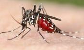 Phát hiện kinh ngạc: Virus Zika có thể sống trong mắt người