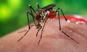 Bộ Y tế thông tin về hai trường hợp nhiễm virus Zika mới
