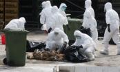 Chủng virus cúm A (H7N9) biến đổi độc lực