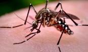 Số ca mắc sốt xuất huyết tại Hà Nội tiếp tục giảm
