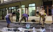 Bắc Giang: Bắt giữ xe khách chở 6 tạ gỗ sưa đỏ