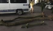 Hà Nội: Tóm gọn các đối tượng đào trộm gỗ sưa giấu trên xe khách
