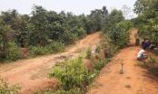 Hòa Bình: Cô giáo tương lai đi chăn bò nghi bị hiếp, giết ném xác trong rừng