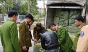 Hà Nội: Bắt giữ đối tượng vận chuyển số lượng khủng nầm lợn bẩn