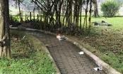 Hà Nội: Thông tin mới nhất về vụ một phụ nữ chết bí ẩn trong vườn hoa, thi thể không có quần