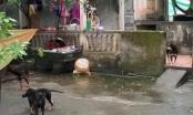 Bé trai 7 tuổi bị chó cắn tử vong: Chủ nuôi chó phải chịu trách nhiệm hình sự?