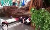 Hà Nội: Mưa lớn, cây đổ ngổn ngang đè chết người