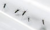 Phát hiện trường hợp nhiễm Zika đầu tiên tại Lào