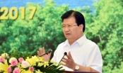 Phó Thủ tướng Trịnh Đình Dũng chủ trì Hội nghị về phát triển lâm nghiệp