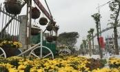 """Con đường hoa đẹp như mơ """"hút hồn"""" du khách tại thành phố Vinh ngày Tết"""