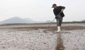 Nghệ An: Ngao đến ngày thu hoạch bỗng há miệng chết trắng bãi, gây thiệt hại nặng nề cho người dân