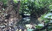 Trại lợn tra tấn người dân: Phải đảm bảo môi trường mới được tiếp tục tái đàn