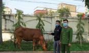 Bắt giữ đối tượng thuê xe tải từ Nghệ An sang Hà Tĩnh để... trộm bò