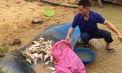 """""""Giải mã"""" nguyên nhân cá chết trên sông Con ở Nghệ An"""