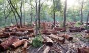 Đăk-Song (Đăk-Nông): Cán bộ bảo vệ rừng bị tố cáo phá rừng nguyên sinh