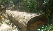 """Đắk Nông: Từ vụ phá rừng, bắt nhóm """"giang hồ"""" cộm cán"""