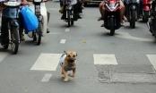 """Chó gây """"tai nạn"""", chủ phải bồi thường"""