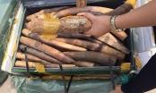 Hà Nội: Bắt giữ 309kg ngà động vật tại sân bay Nội Bài
