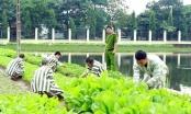Phạm nhân bị điện giật tử vong trong trại giam