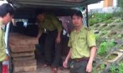 Lâm tặc dùng xe biển xanh chở gỗ lậu, đe dọa kiểm lâm