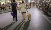 """""""Dắt chó đi dạo"""" và những tranh cãi pháp lý"""