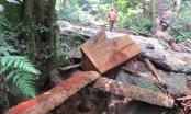 Kỳ 1: Đường đi ngập gỗ lậu